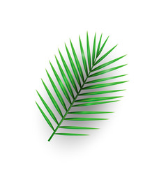 Tropical palm leaf with shadow isolated on white b vector