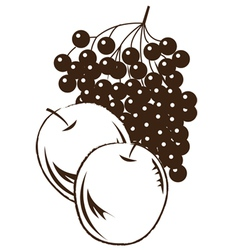 Apple and grape vector