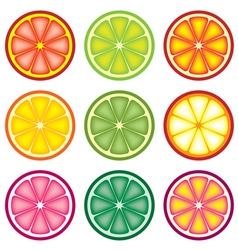 colorful citrus slices vector image