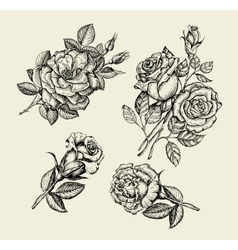 Flowers Hand drawn sketch flower rose dogrose vector image