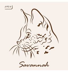 Savannah cat vector image