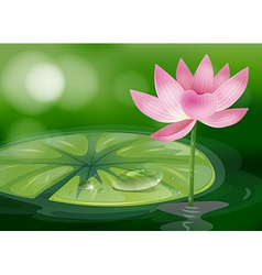 A pink flower at the pond vector