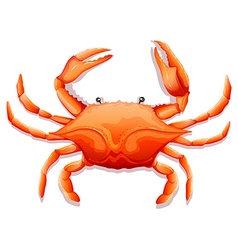 Fresh crab vector