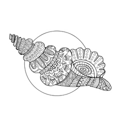 Seashell coloring book vector image