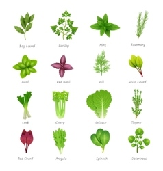 Herbs icons set vector