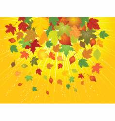 autumn leafs vector image