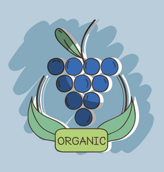 fresh grape organ fruits with leaves vector image