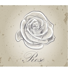 Hand drawn rose on grunge background vector image vector image