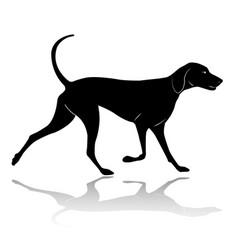 hunting dog walking silhouette vector image