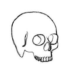 Contour skeleton of the human skull icon vector