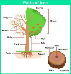 Leaning parts of tree for kids worksheet vector