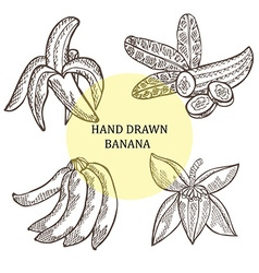Hand drawn banana fruits vector