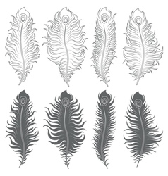 Set of with peacock feathers vector