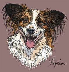 Papillon in color vector