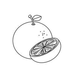 line drawing fruit vector image