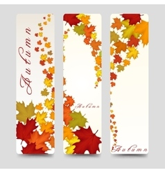 Bookmarks with colorful autumn maple leaves vector image