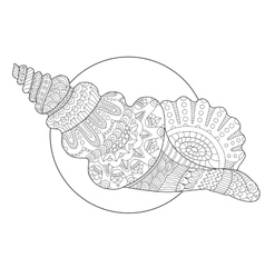 Seashell coloring book vector