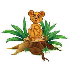A trunk with a young lion vector image