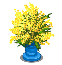 bouquet of yellow mimosa in blue vase vector image