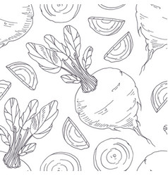 Hand drawn seamless pattern with beetroot vector