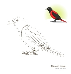Maroon oriole bird learn to draw vector