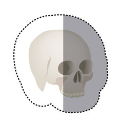 sticker side view realistic human skull icon vector image
