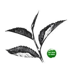 Hand drawn tea leaf vector