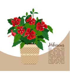 Hibiscus plant in pot banner vector