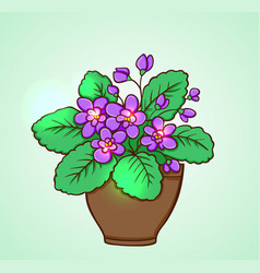Blooming violets in a flowerpot vector