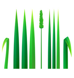strong grass icon realistic style vector image