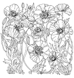 Field poppies spring pattern vector