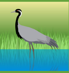 Demoiselle crane flat design vector