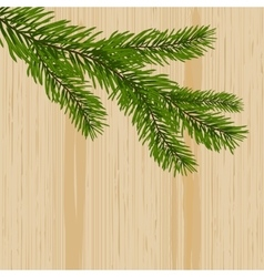 Green spruce branches on the background nature of vector