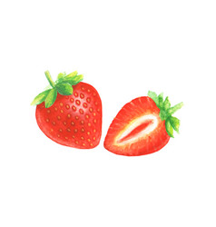 watercolor hand drawn strawberry vector image vector image