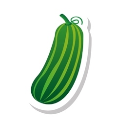 Cucumber vegetable isolated icon vector