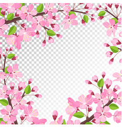 cherry blossom background vector image