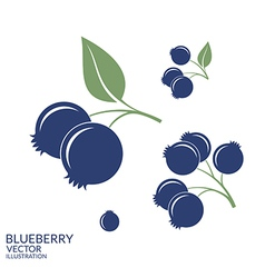 Blueberry set vector