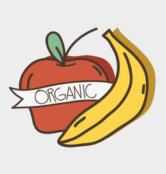 Fresh apple and banana organ fruits with ribbon vector