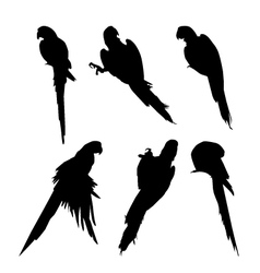 Macaw birds silhouette set vector