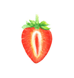 watercolor half of strawberry vector image