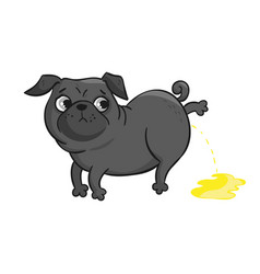 Cute pug isolated on white background vector
