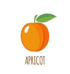Apricot icon in flat style on white background vector