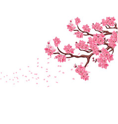 branches with pink cherry blossoms sakura the vector image vector image