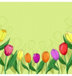 flowers tulips on a green vector image vector image