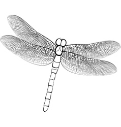 sketch of a dragonfly isolated on vector image vector image