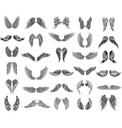 Thirty pairs of wings graphic vector