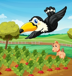 Toucan over farm vector image