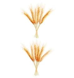 Two Wheat ears isolated EPS 10 vector image vector image
