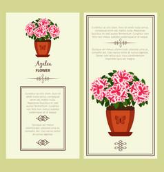 Azalea flower in pot banners vector