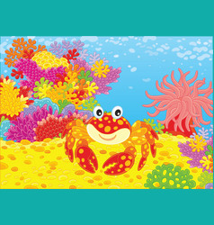 Crab and corals vector